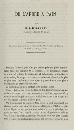 De l'arbre à pain (1872)
