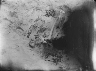 Squelette d'une tombe de Fakarava (1884)