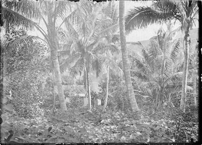 Cocoteraie de Sainte Amélie à Papeete (1892)