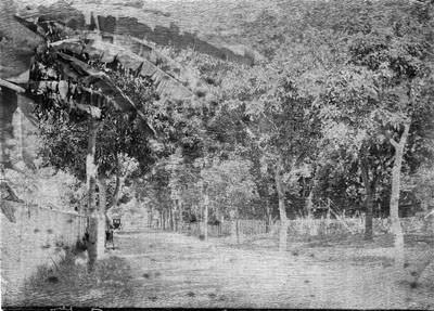 Rue de Rivoli à Papeete (1892)