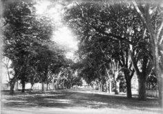 L'avenue de Sainte Amélie (1892)