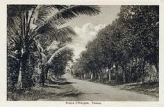 Avenue d'orangers à Taravao