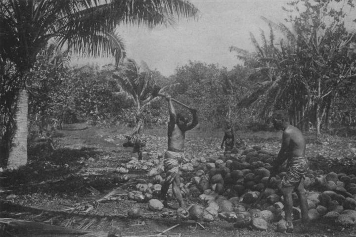 Ouverture des noix de coco à la hache (1919)