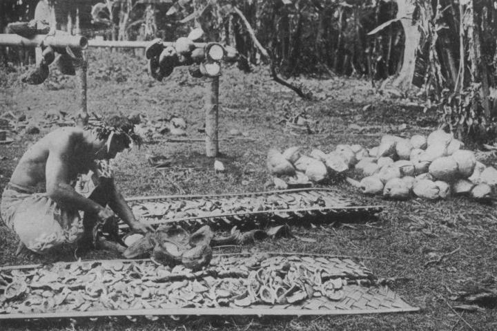 Extraction de l'amande des noix de coco (1919)