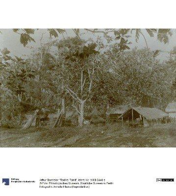 Tautira (1896)