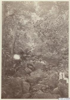 Portrait dans la nature (1886)