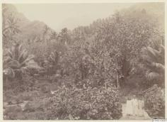 Hiva Oa (1886)