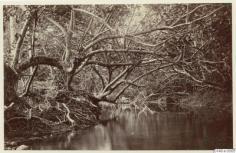 Rivière à Tahiti (1886)