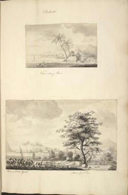 Voyages de Cook : l'arbre à pain (1769)