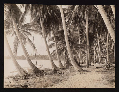 Pinchot South Seas Expedition : Toau (1929)