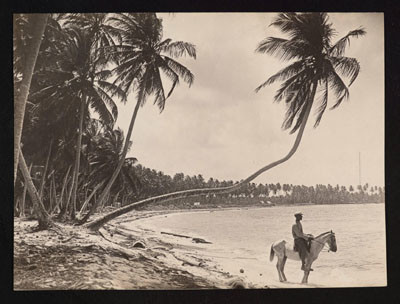 Pinchot South Seas Expedition : Cavalier en bord de lagon (1929)
