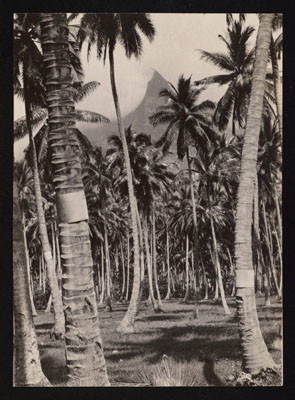 Pinchot South Seas Expedition : Cocoteraie à Hiva Oa (1929)