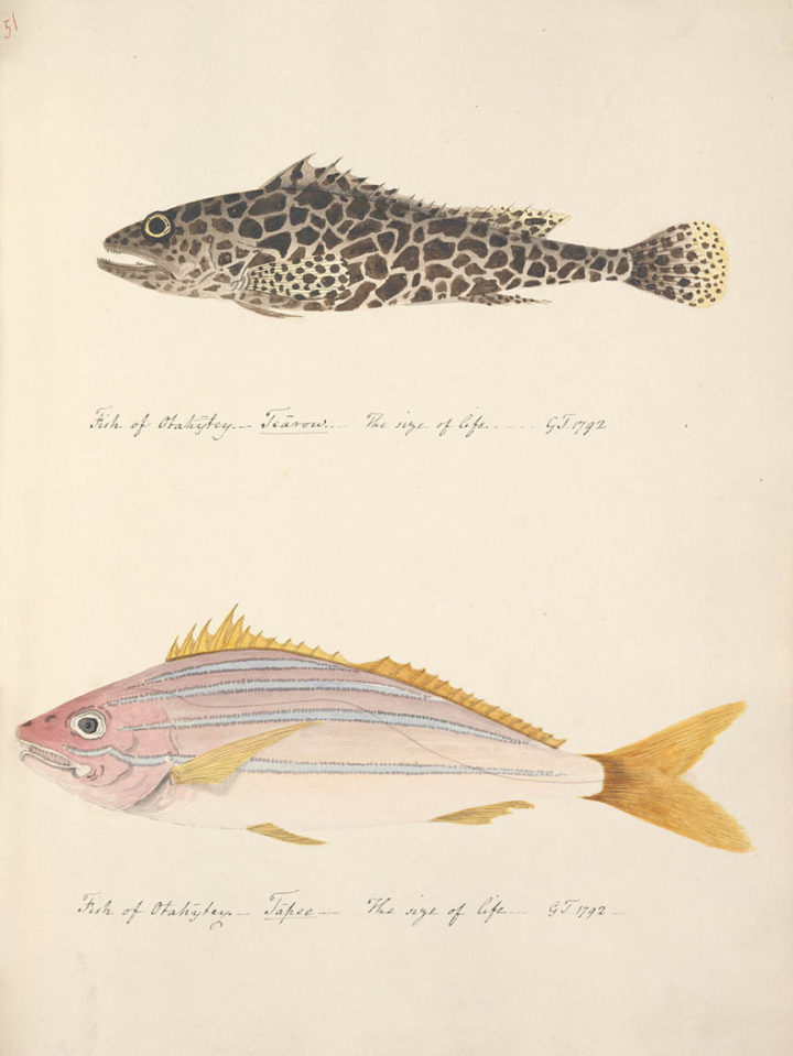 Poissons de Tahiti I (1792)