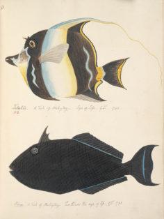 Poissons de Tahiti II (1792)