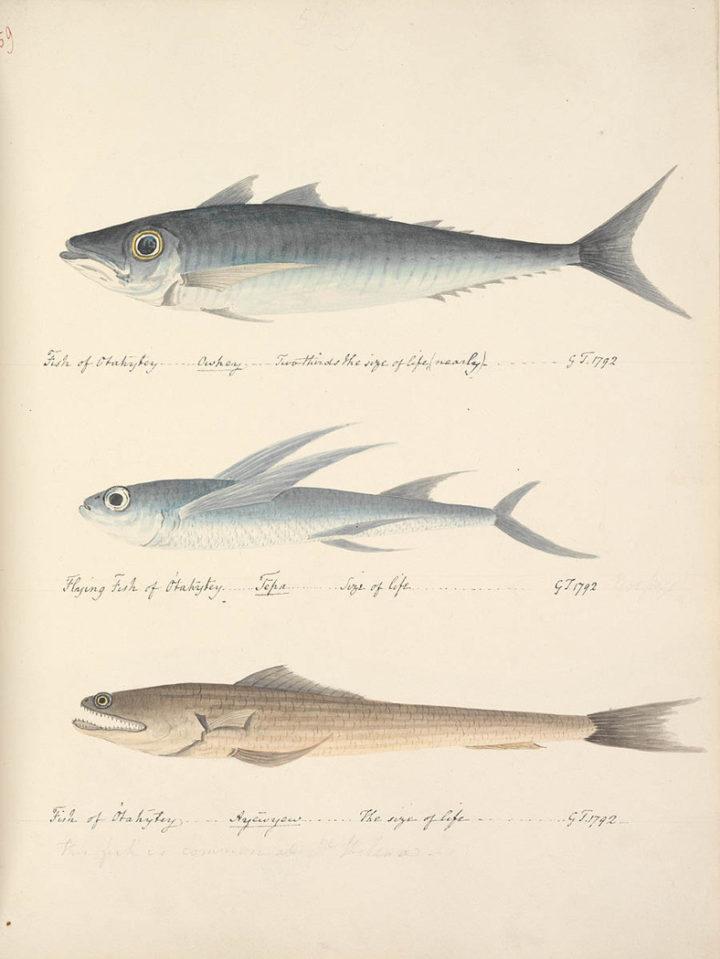 Poissons de Tahiti IV (1792)