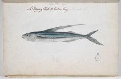 Poisson volant (1791-1793)