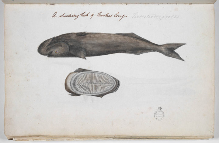 Rémora (1791-1793)