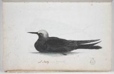 Noddie (1791-1793)