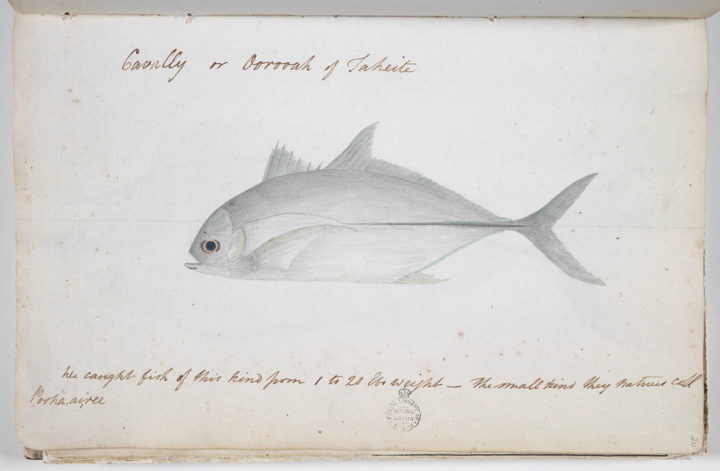 Carangue (1791-1793)