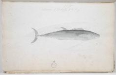 Thazard – Paere (1791-1793)