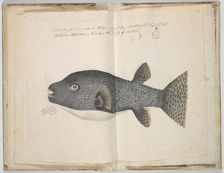 Huehue (1791-1793)