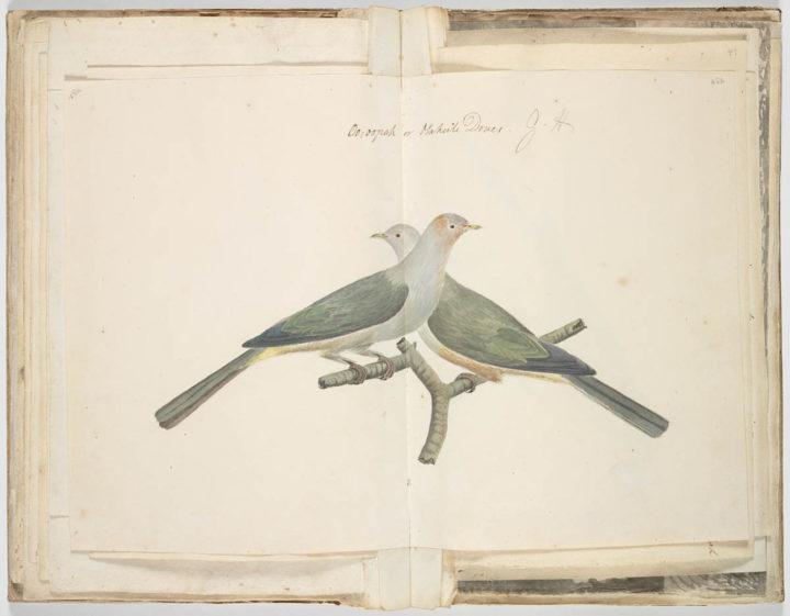 Ptilope de la Société (1791-1793)