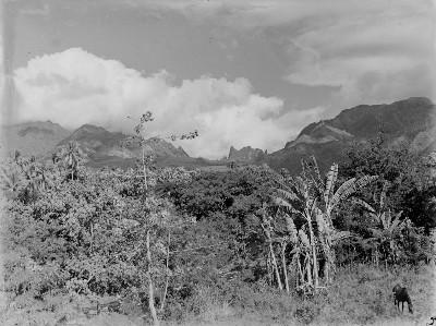 Chevaux devant paysage du Pacifique (1964)