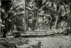 Pirogue des îles Marquises (1910)