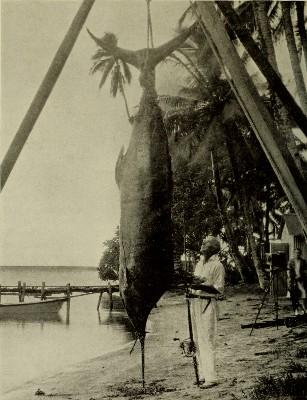 Zane Gray et un marlin géant