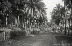 Route sur la côte ouest de Tahiti (1936)