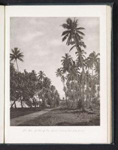 Route du bord de mer à Tahiti (1880)