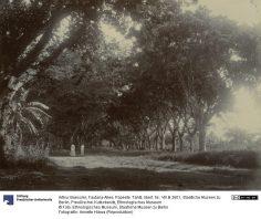 Allée de la Fautaua – Photographie de Arthur Baessler (1896-1898)