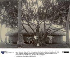 """Fare de """"ori a Ori"""" – Tahiti – Photographie de Arthur Baessler (1896-1898)"""