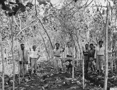 Plantage à Papeari (1922)