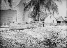 Pirogue cousue sur la plage à Makemo – Photo N°A2503 – Harry Clifford Fassett (1899-1900)