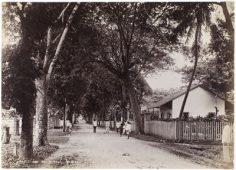 Rue de Rivoli – Tahiti